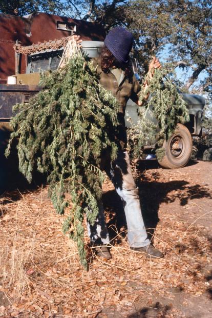Mel Frank, Mokelumne Hill, Calaveras County, CA, 1978