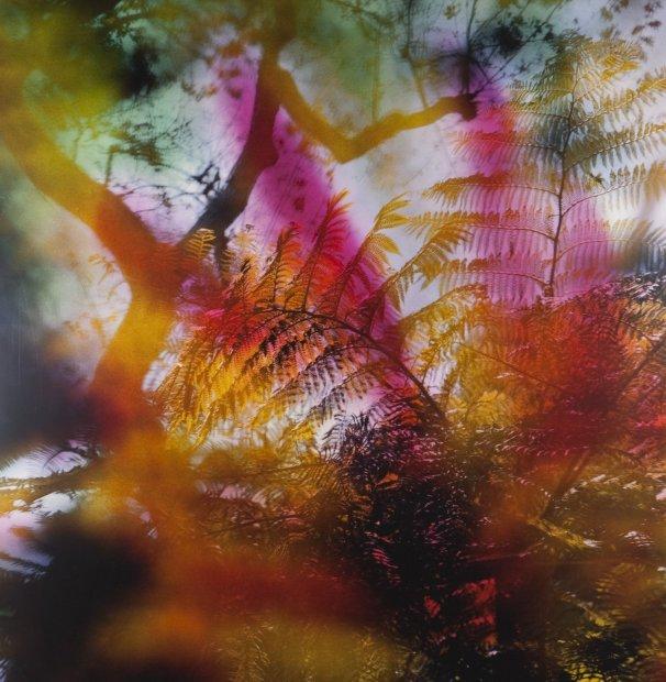 Lisa Eisner Sunset Tree Fern clear Fujiflex c-print on Fujiflex c-print mounted to plexi in oak frame 20 x 20...