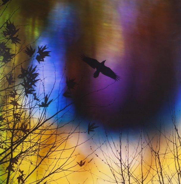 Lisa Eisner Freebird clear Fujiflex c-print on Fujiflex c-print mounted to plexi in oak frame 20 x 20 inches