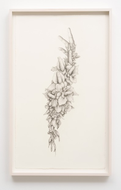 Aurel Schmidt Untitled (Gladiolas) pencil, colored pencil on paper paper size: 27-1/2 x 16-1/4 inches framed size: 30 x 18-1/2...