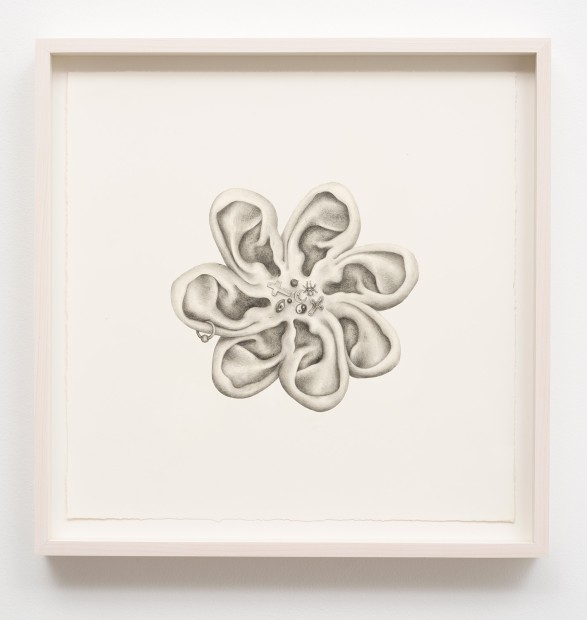 Aurel Schmidt Untitled (Ears) pencil, colored pencil on paper paper size: 12 x 12 inches framed size: 14 x 14...