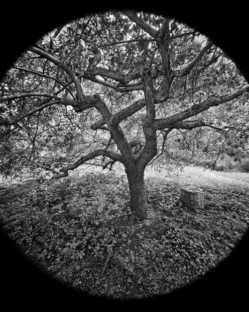 Scott Mead  Autumn, 1974